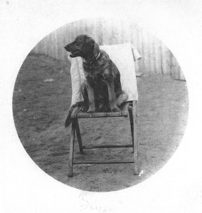 Flyer, sitting on a chair