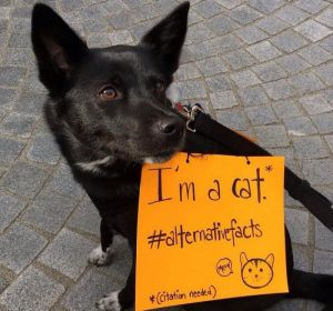 "dog with sign that says, ""I'm a cat...#alternative facts"""